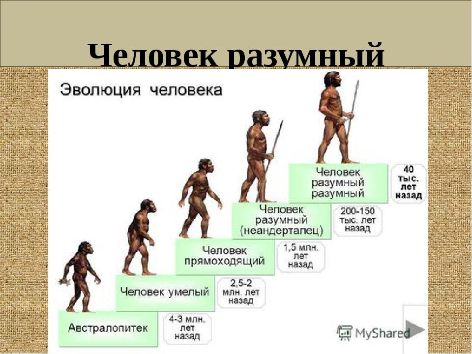 Человек разумный (Homo sapiens)