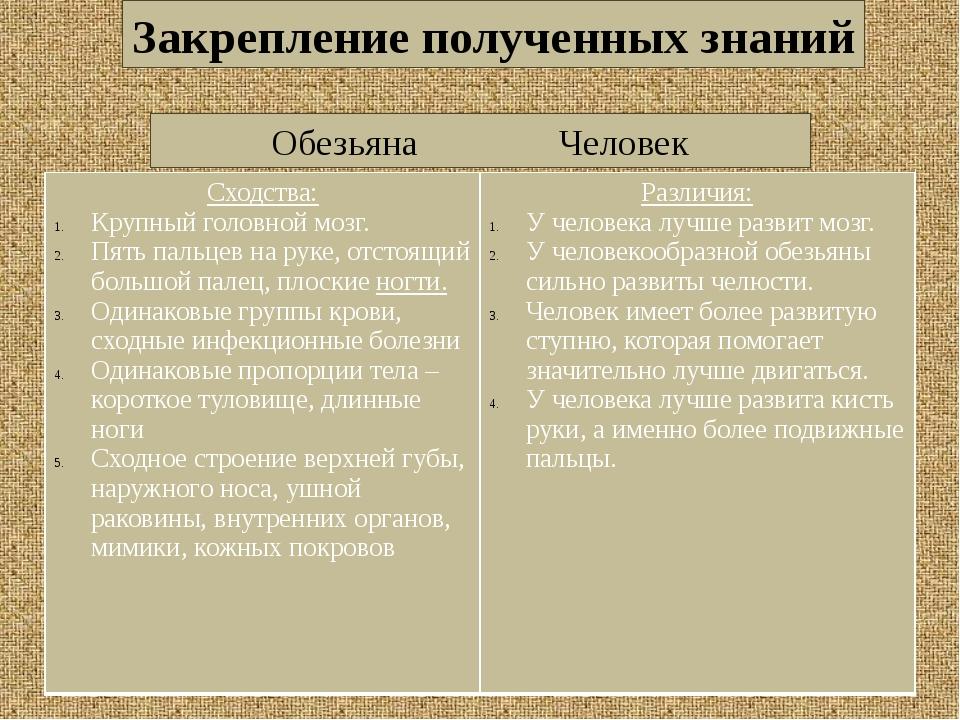 ОбезьянаЧеловек Закрепление полученных знаний Сходства: Крупныйголовной мо...