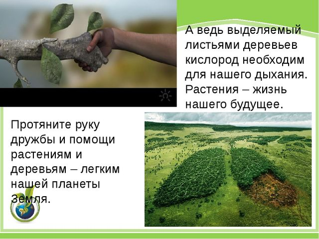 Протяните руку дружбы и помощи растениям и деревьям – легким нашей планеты Зе...