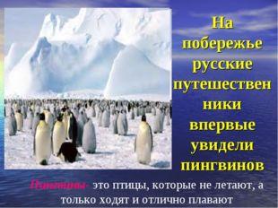 На побережье русские путешественники впервые увидели пингвинов Пингвины- это
