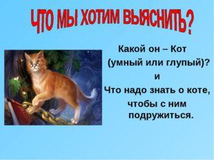 Какой он – Кот (умный или глупый)? и Что надо знать о коте, чтобы с ним подр