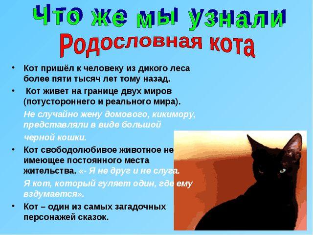 Кот пришёл к человеку из дикого леса более пяти тысяч лет тому назад. Кот жив...