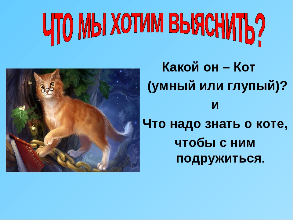 Какой он – Кот (умный или глупый)? и Что надо знать о коте, чтобы с ним подр...