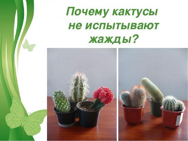 Почему кактусы не испытывают жажды? Free Powerpoint Templates Page *