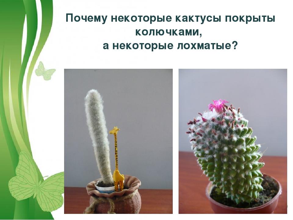 Почему некоторые кактусы покрыты колючками, а некоторые лохматые? Free Powerp...
