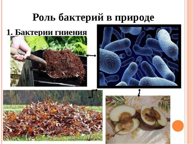 Роль бактерий в природе 1. Бактерии гниения