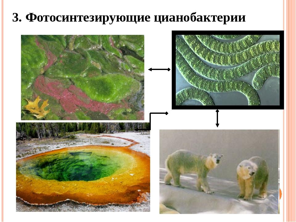 3. Фотосинтезирующие цианобактерии