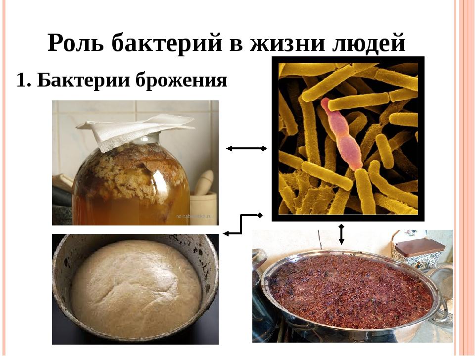 Роль бактерий в жизни людей 1. Бактерии брожения