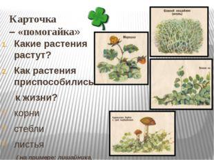 Карточка – «помогайка» Какие растения растут? Как растения приспособились к ж