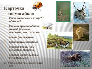 Карточка – «помогайка» Какие животные и птицы обитают? Как они приспособились