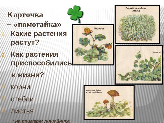 Карточка – «помогайка» Какие растения растут? Как растения приспособились к ж...