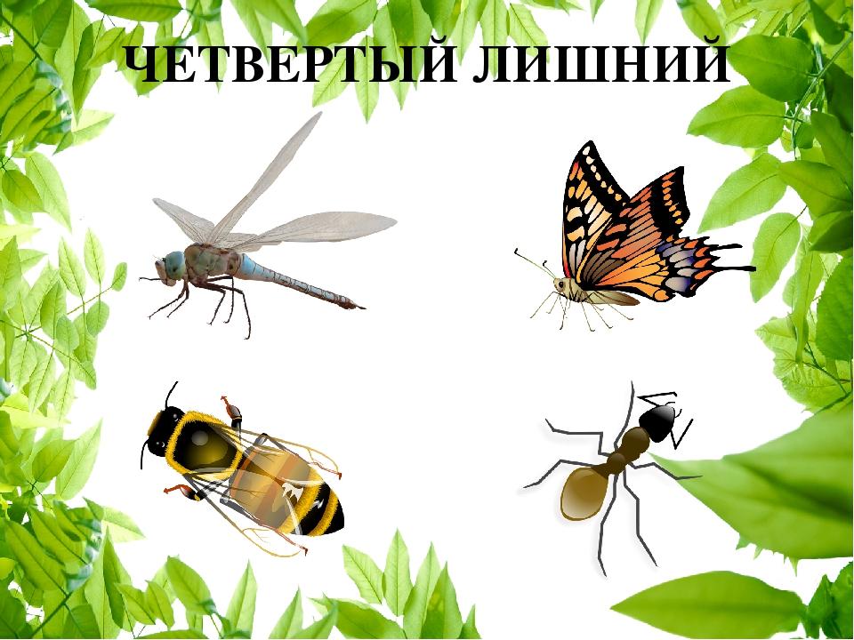 телесигналы декодирует, картинка четвертый лишний насекомые лучшие обои
