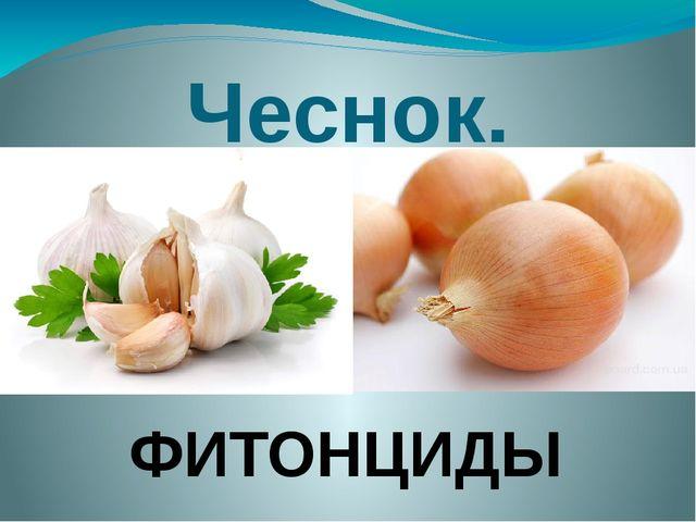 Чеснок. ФИТОНЦИДЫ