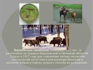 Воронежский заповедник площадью 31,1 тыс. га расположен на границе Воронежск