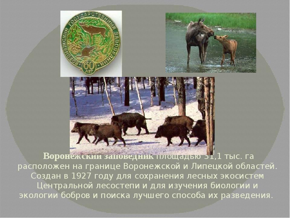 Воронежский заповедник площадью 31,1 тыс. га расположен на границе Воронежск...