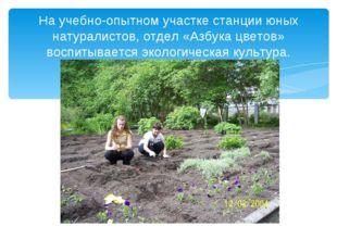 На учебно-опытном участке станции юных натуралистов, отдел «Азбука цветов» во