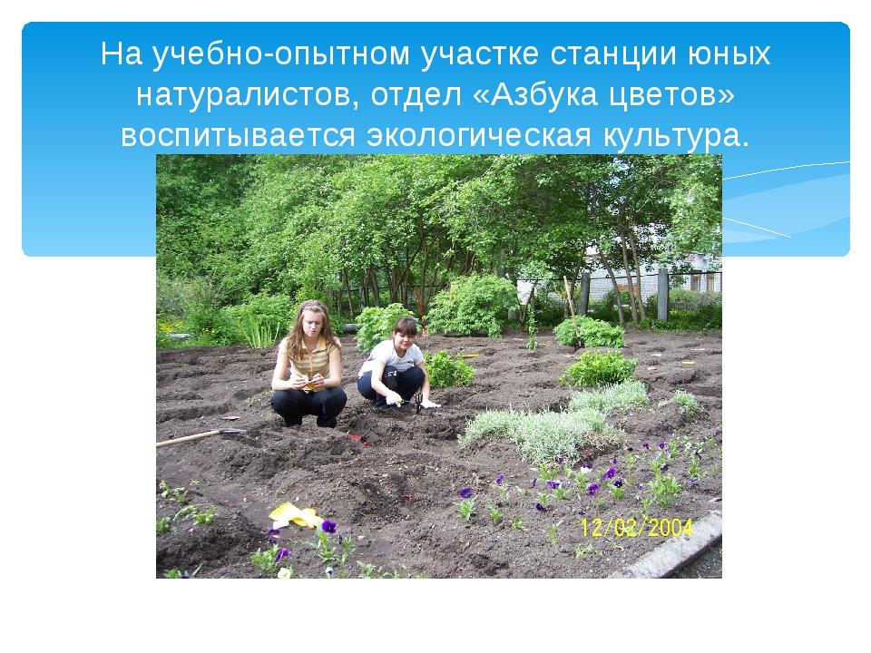 На учебно-опытном участке станции юных натуралистов, отдел «Азбука цветов» во...