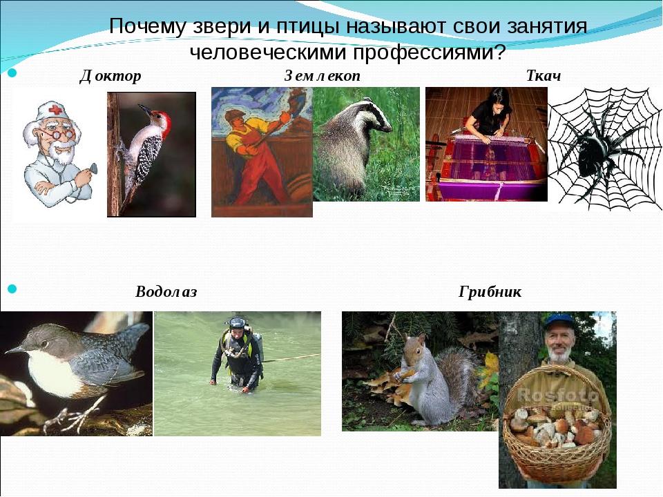 Почему звери и птицы называют свои занятия человеческими профессиями? Доктор...