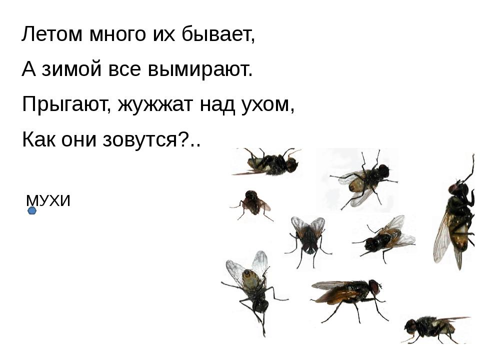 Летом много их бывает, А зимой все вымирают. Прыгают, жужжат над ухом, Как он...