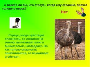 А верите ли вы, что страус , когда ему страшно, прячет голову в песок? Страу