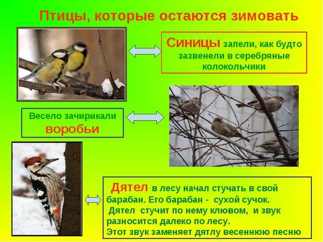 Птицы, которые остаются зимовать Синицы запели, как будто зазвенели в серебря...