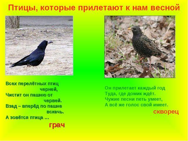 Птицы, которые прилетают к нам весной Всех перелётных птиц черней, Чистит он...