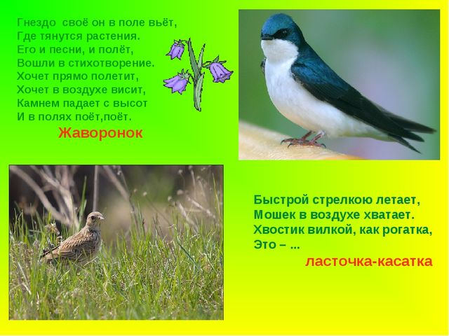 Гнездо своё он в поле вьёт, Где тянутся растения. Его и песни, и полёт, Вошли...