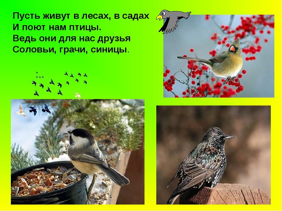 Пусть живут в лесах, в садах И поют нам птицы. Ведь они для нас друзья Соловь...