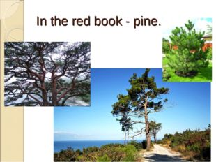In the red book - pine.