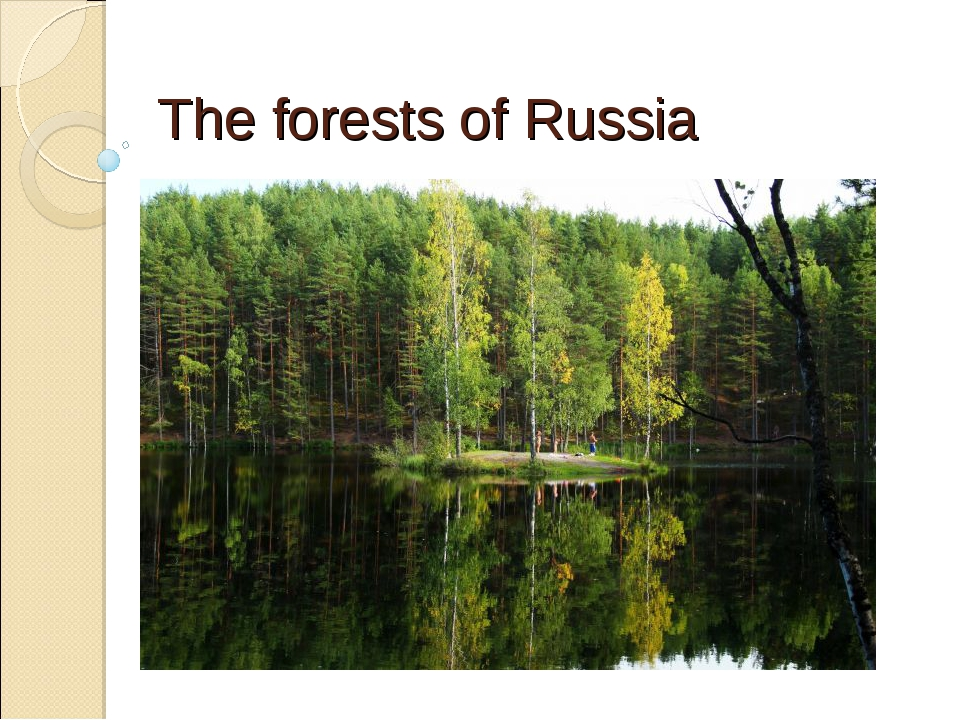 The forests of Russia