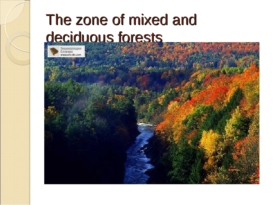 The zone of mixed and deciduous forests