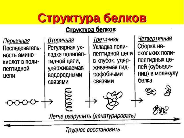 Структура белков