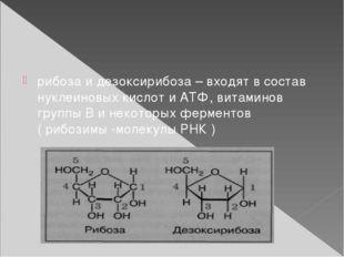 рибоза и дезоксирибоза – входят в состав нуклеиновых кислот и АТФ, витаминов