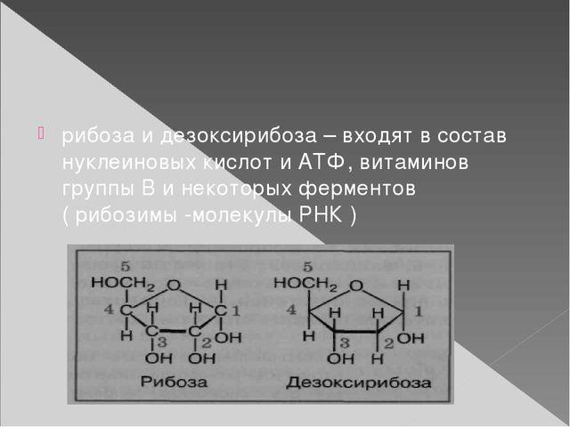 рибоза и дезоксирибоза – входят в состав нуклеиновых кислот и АТФ, витаминов...