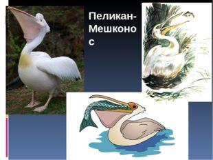 Пеликан- Мешконос