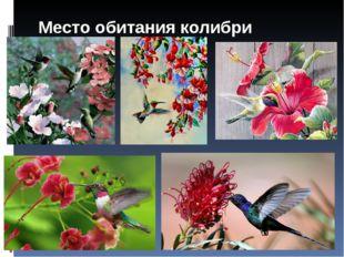 Место обитания колибри