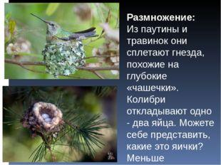 Размножение: Из паутины и травинок они сплетают гнезда, похожие на глубокие «