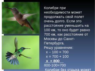 Колибри при необходимости может продолжать свой полет очень долго. Если это р
