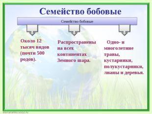 Семейство бобовые Около 12 тысяч видов (почти 500 родов). Распространены на в
