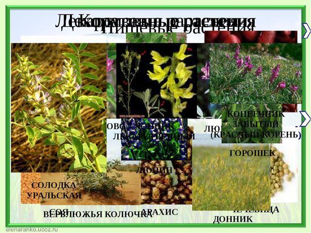 Пищевые растения Кормовые растения Декоративные растения Лекарственные растения