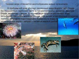 Чёрное море отличается многообразием живых организмов. В прибрежной зоне оби