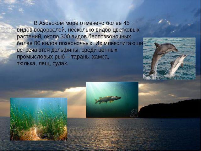 В Азовском море отмечено более 45 видов водорослей, несколько видов цветковы...