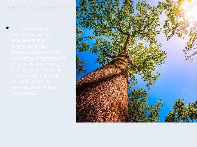 Ветки деревьев, листва и древесина используются для получения щепы- дополнит...