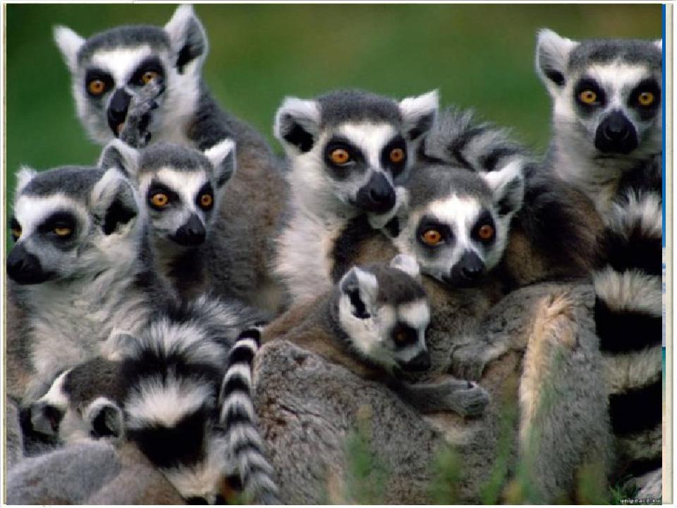 Самый большой остров у берегов Африки – Мадагаскар. От материка его отделяет...