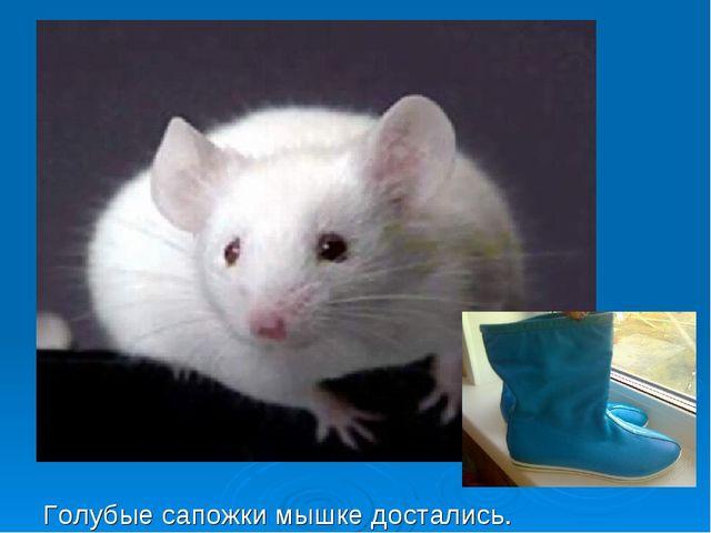Голубые сапожки мышке достались.