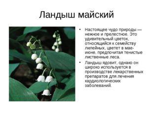 Ландыш майский Настоящее чудо природы — нежное и прелестное. Это удивительный