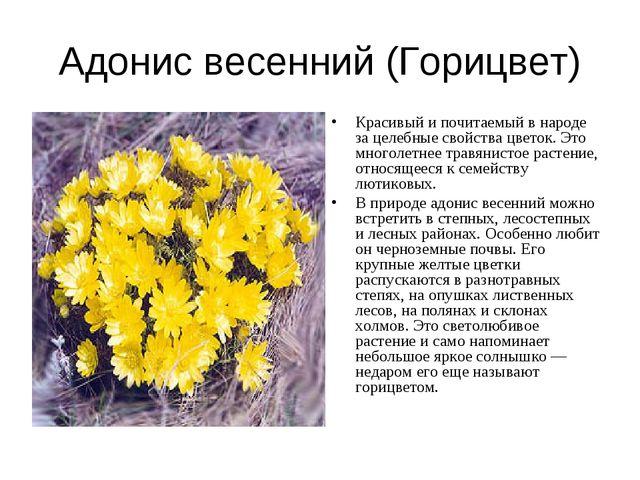 Адонис весенний (Горицвет) Красивый и почитаемый в народе за целебные свойств...