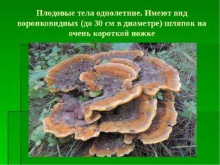 Плодовые тела однолетние. Имеют вид воронковидных (до 30 см в диаметре) шляпо