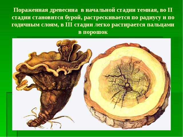 Пораженная древесина в начальной стадии темная, во II стадии становится бурой...