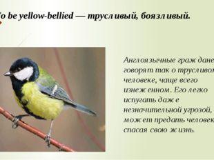 To be yellow-bellied — трусливый, боязливый. Англоязычные граждане говорят та